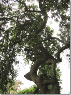 odd tree bigger picture